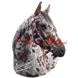 Samolepka appaloosa, kůň, koně