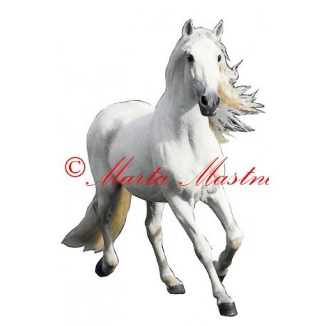 Samolepka andaluský kůň