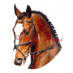 Samolepka teplokrevník Orido, kůň, koně