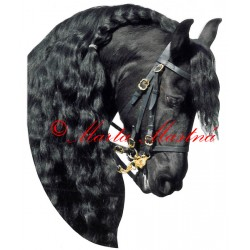 Samolepka fríský kůň, koně