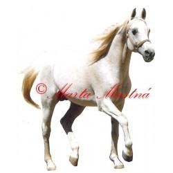 Samolepka arabský kůň Emigrant