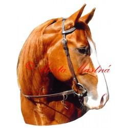 Samolepka quartër horse, western, kůň, koně