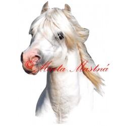 Samolepka velšpony, kůň, koně