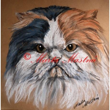 Obraz kočka perská