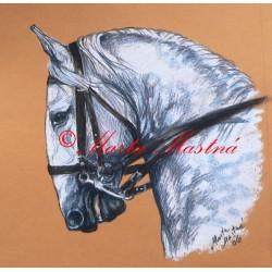 Obraz starokladrubský bělouš