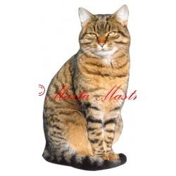 Samolepka kočka archiv