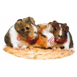 Samolepka morče, morčata (doprodej)