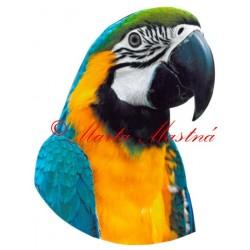 Samolepka ara ararauna, papoušek