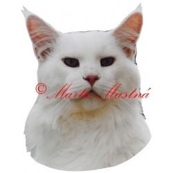 Samolepka kočka mainská mývalí archiv
