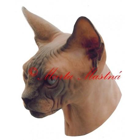 Samolepka kočka sphinx