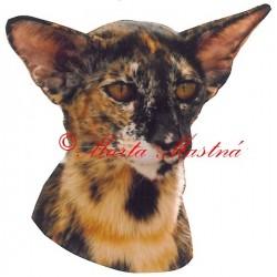 Samolepka kočka orientální želvovinová archiv