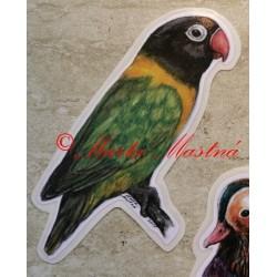 Samolepka agapornis, papoušek