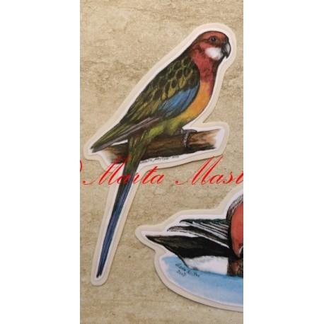 Samolepka papoušek rosela