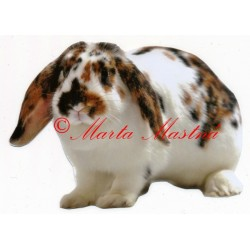 Samolepka králík