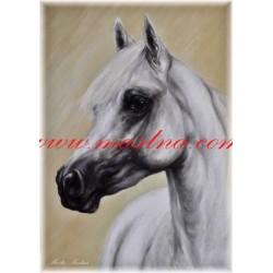 Obraz arabský kůň, olejomalba - tisk