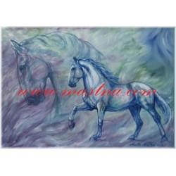 Obraz kladrubský kůň, koně, olejomalba - tisk