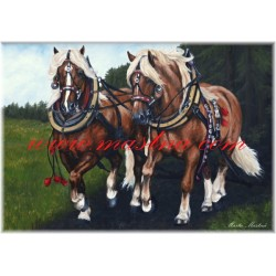 Obraz českomoravský belgik, koně, olejomalba - tisk
