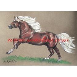 Obraz hafling, koně, pastel - tisk