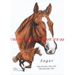 Obraz anglický plnokrevník Sagar, koně, perokresba - tisk