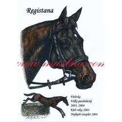 Obraz anglický plnokrevník Registana, koně, perokresba - tisk
