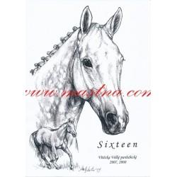 Obraz anglický plnokrevník Sixteen, koně, perokresba - tisk