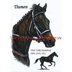 Autorský tisk anglický plnokrevník, Tiumen