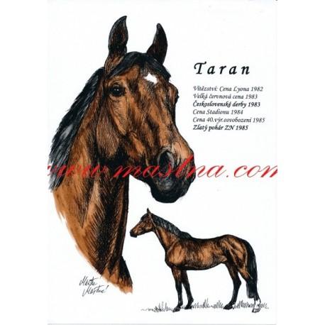 Autorský tisk anglický plnokrevník, Taran