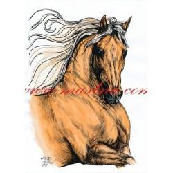 Obraz kůň, koně, perokresba - tisk