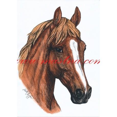 Autorský tisk kůň