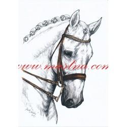Obraz holštýnský kůň, koně, perokresba - tisk