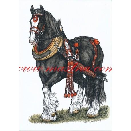 Autorský tisk chladnokrevník, shire horse, zápřež