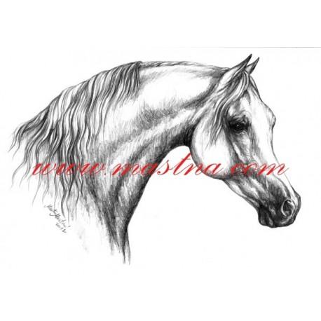 Autorský tisk kůň arab