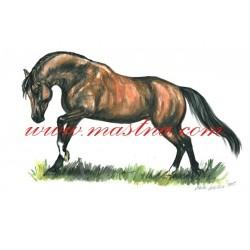 Obraz arabský kůň, koně, akvarel- tisk