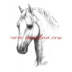 Obraz lipicán, koně, tužka - tisk