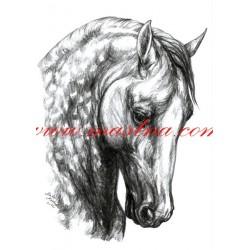 Obraz andaluský kůň, koně, tužka - tisk