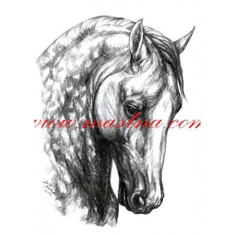 Autorský tisk andaluský kůň