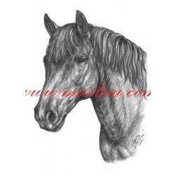 Autorský tisk hucul, pony