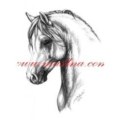 Autorský tisk welsh pony