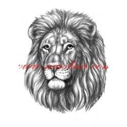 Obraz lev, tužka - tisk