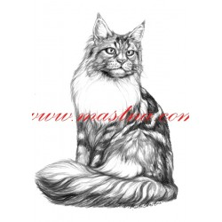 Obraz kočka mainská, tužka - tisk