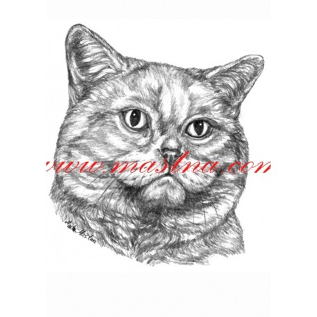 Autorský tisk kočka