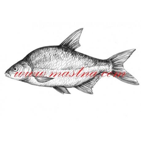 Autorský tisk ryba cejn