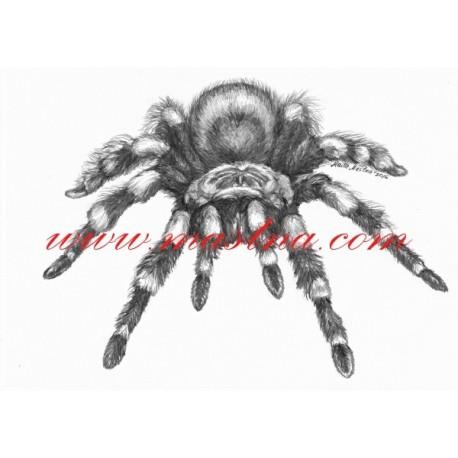Autorský tisk pavouk sklípkan