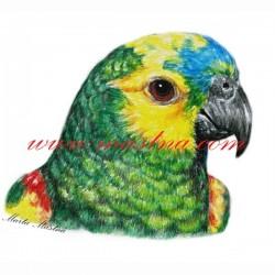 Autorský tisk papoušek amazoňan modročelý