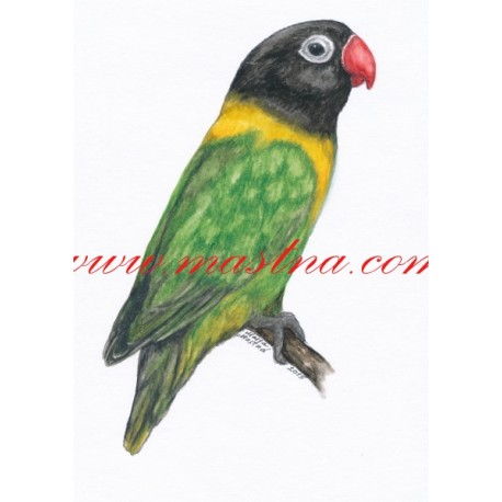 Autorský tisk papoušek agapornis