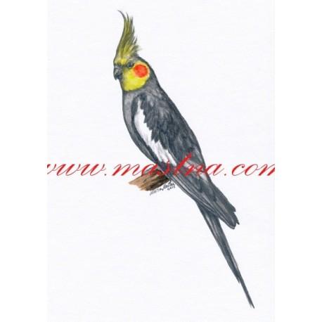 Autorský tisk papoušek korela