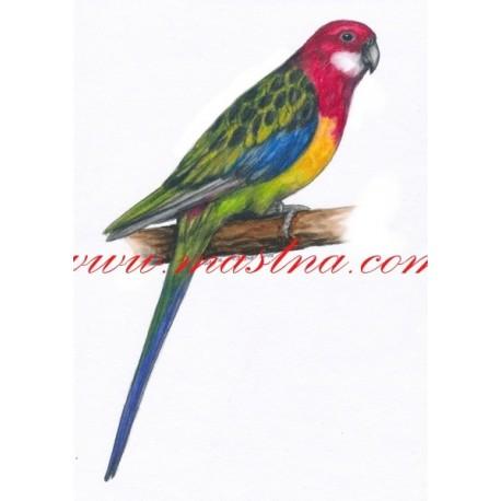 Autorský tisk papoušek rosela