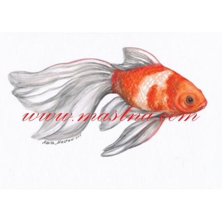Autorský tisk akvarijní rybička závojnatka