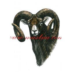 Obraz muflon, myslivost, perokresba - tisk