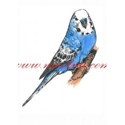 Obraz andulka, papoušek vlnkovaný, perokresba - tisk